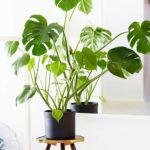 Les plantes comme lment dcoratif vous aimez ? Je voushellip